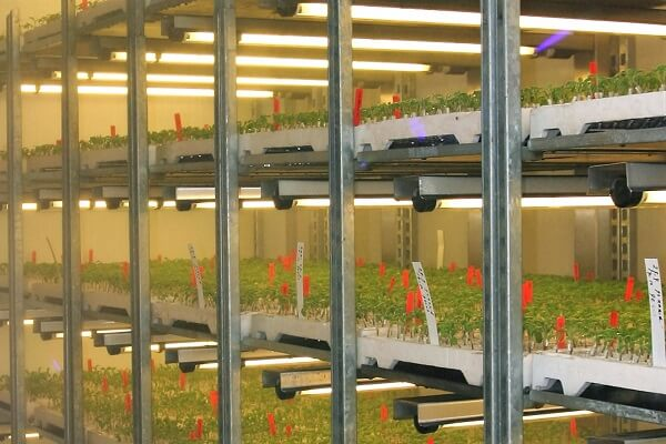Nijssen plantgrowthroom production