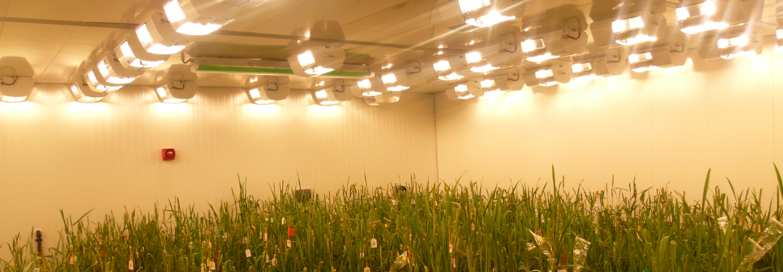 Energy efficient led lighting in Nijssen Wheat Donor Room Syngenta UK